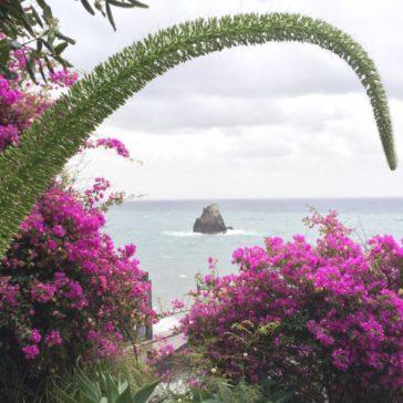 Madeira – Urlaub auf der Blumeninsel